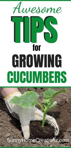 Awesome tips for growing cucumbers to make sure you have big, strong plants. Great ideas for getting rid of bitter cucumbers. Backyard Vegetable Gardens, Veg Garden, Edible Garden, Lawn And Garden, Garden Junk, Glass Garden, Garden Landscaping, Growing Plants, Growing Vegetables