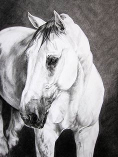 Horse Art: Castol, Charcoal Drawing Limited Edition Reproduction. $40.00, via Etsy.