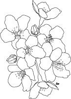 I know this says adult coloring pages BUT some of them could be used as Quilting Motifs. I know I've used coloring pages for quilting. Adult Coloring Pages - Complex Coloring Design Sheets