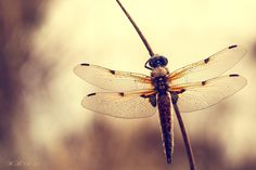 "Photograph ""Wings"" b"