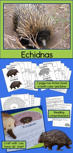Echidnas Non-fiction Guided Reading Book and Craftivity Reading Passages, Reading Comprehension, Science Lessons, Science Activities, Animal Years, All About Animals, Unit Plan, Australian Animals, Life Cycles