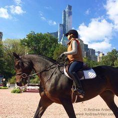 Central Park + Horse Show Beauties = Magic! #horses #centralpark #NYC #newyorkcity