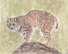 """Bobcat Pause"" original watercolor and conte' by Jan Burley"