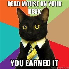 Business Cat on Rewards