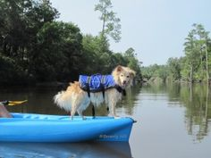 Good safety tips for Kayaking or Canoeing with a furry companion!