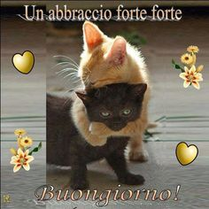 Immagini belle per dire Bu ongiorno Cute Funny Animals, Funny Cats, Animals And Pets, Baby Animals, Happy Birthday Greetings Friends, Miss You Images, Italian Greetings, Italian Memes, Emoji Images