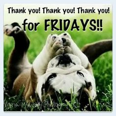 Thank You For Friday friday happy friday tgif good morning friday quotes good…