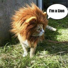 I'm not lyin' I'm a lion.