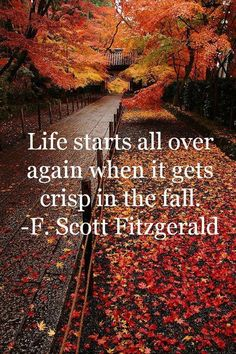 30 Quotes About Fall That Prove Autumn Is The Best Season Montag Motivation, Autumn Aesthetic, Life Quotes Love, Book Quotes, Scott Fitzgerald, Seasons Of The Year, All Nature, Nature Quotes, Happy Fall Y'all