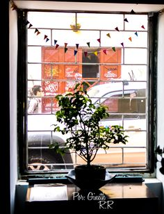 #natural #nature #photography #window  #colors