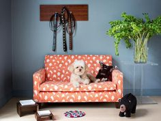 13 stylish pet accessories and supplies. #dogcouch #leashes #dogtreats (Photo by: Brian Patrick Flynn)