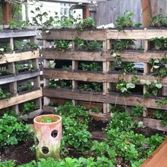 Reclaiming pallets to make vertical strawberry bed.