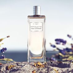 Inspired by Seashore Lavender's rugged surroundings, Men's Collection Cool Lavender brings you the full feel-good effect of nature. #Oriflame #Fragrance #Summer