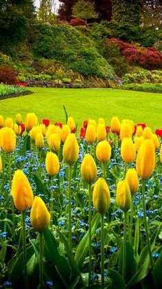 Organic Gardening In Chennai Key: 4715571238 Beautiful Flowers Garden, Amazing Flowers, Beautiful Roses, Pretty Flowers, Beautiful Gardens, Beautiful Nature Pictures, Beautiful Nature Wallpaper, Amazing Nature, Beautiful Landscapes
