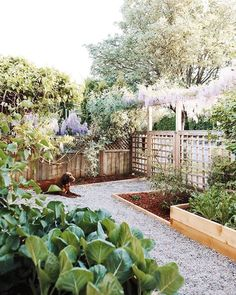 tara hurst Garden Trellis, Garden Bridge, Home And Garden, Outdoor Structures, Plants, Instagram, Passion, Gardening, Lawn And Garden