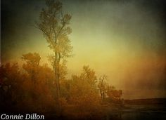 The Tall Tree 85 x 11 Color Photograph river  by ConnieDillon10, $17.00