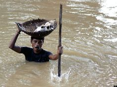 During massive floods taking place in Cuttack City, India, in 2011, a heroic villager saved numerous stray cats by carrying them with a basket balanced on his head.