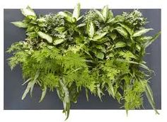 Mobilane UK are leading living wall and green roof design specialists, supplying beautiful indoor and outdoor green products throughout the UK.