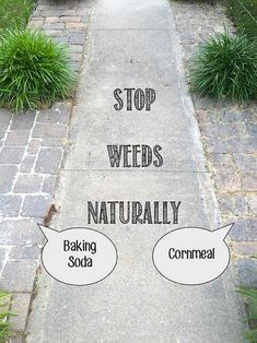 15 Natural Ways to KILL / PREVENT WEEDS: Baking Soda, Cornmeal, Salt, Bleach, Hot Water, Vinegar, Dishsoap, Essential Oils, + magical mixtures of these, Newspaper, Pulling, etc