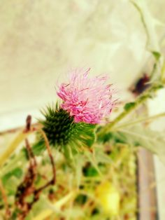 Summer ❤☀ garden