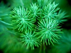 "Titulo: ""Verde"" Autor: Cecilio Gonzalez Nuevo País: España Foro: COLORES http://blipoint.com/gallery/44846  ( Published: 15/8/16 )"