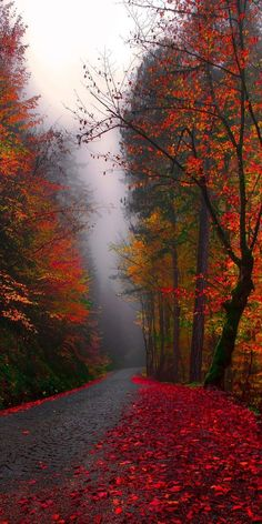 44 Ideas nature landscape beautiful places photography for 2019 Fall Pictures, Pretty Pictures, Autumn Photos, Fall Pics, Beautiful World, Beautiful Places, Natur Wallpaper, Image Nature, Autumn Scenery