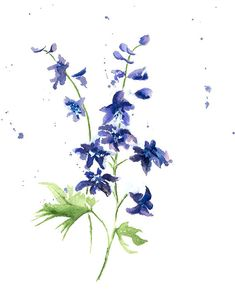 Delphinium Print From Original Watercolor Spring by wrensroost, $14.00