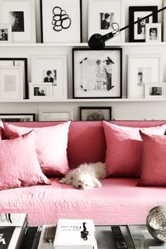 pink sofa + cute dog