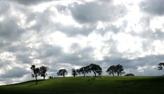 Denis  clouds 4  Clouds and light  https://www.flickr.com/photos/denis_fox/234757642/sizes/o/