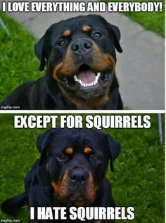 Except for squirrels. I hate those damn squirrels! They put their stupid peanuts in my pots! Then they come in my yard scratching their fleas. Nasty stupid squirrels!