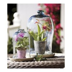 Bell Jar and Saucer sets, Crate and Barrel - pretty way to bring some green to a room!