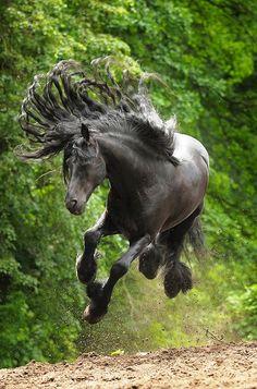 Horse Jumping ♥