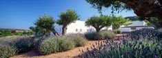 react architects steps 'the gaze' house into idyllic greek island landscape - daisy Architecture Photo, Landscape Architecture, Landscape Design, Greece Design, Paros Greece, Roof Plan, Exterior, 3d Visualization, Greek Islands
