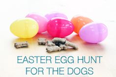Easter Egg Hunt for the Dogs // Ammo the Dachshund