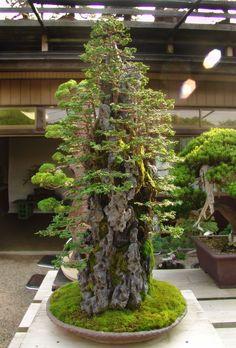Unos de bosques de kimura