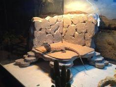 how to create a cool bearded dragon habitat , for Hupp