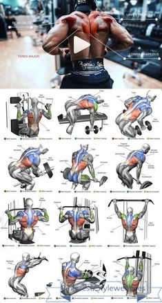 Ultimate back workout plan for massYou can find Muscle building workouts and more on our website.Ultimate back workout plan for mass Fitness Workouts, Weight Training Workouts, Gym Workout Tips, Biceps Workout, Traps Workout, Boxing Training, Workout Body, Lifting Workouts, Workout Men