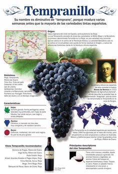 Variedad Tempranillo #infografía. To learn more about Bilbao | Rioja, click here: http://www.greatwinecapitals.com/capitals/bilbao-rioja
