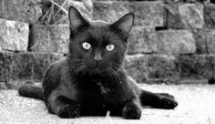 """""""You will always be lucky if you know how to make friends with strange cats."""" ~ ancient proverb"""