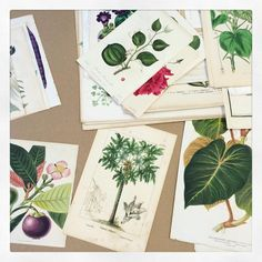 Don't these #botanical #antiques make you swoon?