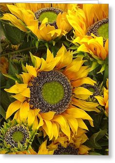 Sunflower print, canvas, framed, or on acrylic sheets. Forsale MY FAVORITE… Sunflower Canvas, Sunflower Garden, Happy Flowers, Beautiful Flowers, Sun Flowers, Sunflowers And Daisies, Growing Sunflowers, Wildflowers, Sunflower Pictures