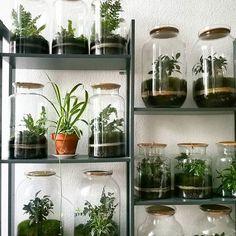 The #spiderplant ️    #bonsai #jar #capsulegardens #terrarium