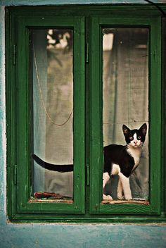 Black and white cat in green window