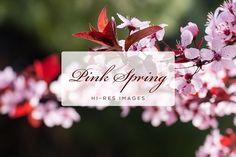Pink Spring Flowers by QueenDesigns on @creativemarket