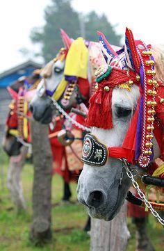 This photo from Iwate, Tohoku is titled 'Umako festival Japanese Costume, Japanese Kimono, Japanese Celebrations, Japan Travel, Japan Trip, Different Horse Breeds, Matsuri Festival, All About Japan, Japanese Festival