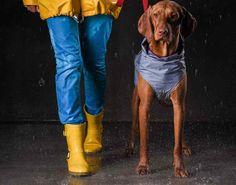 Dog Milk Best of Sep Dog Milk Best of September 2018 - Design Milk Dog Raincoat, Raincoat Jacket, Yellow Raincoat, Dog Jacket, Hooded Raincoat, Rain Jacket, Large Dog Costumes, Waterproof Dog Coats, Rain Slicker