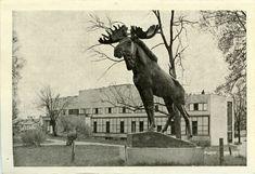 Viipuri ennen ja nyt - kuvat kertovat, kuinka kaupunki on muuttunut Real People, Finland, Moose Art, Nostalgia, Batman, Horses, Travel, Animals, Fictional Characters