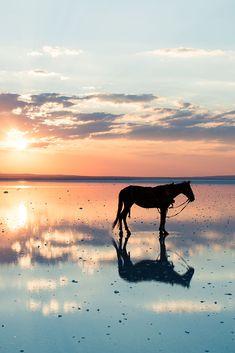 Horse - TouCanvas