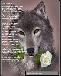 Resultado de imagen para lobos enamorados con frases