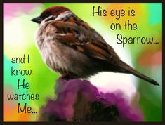 """""""His eye is on the sparrow, and I know He watches me."""" (Matthew 10:29–31 & Matthew 6:26)"""